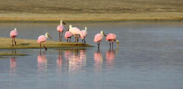 Nope...not flamingos!