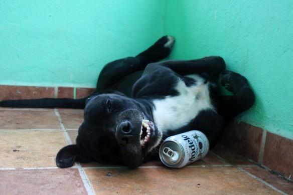 Negro the dog legend.